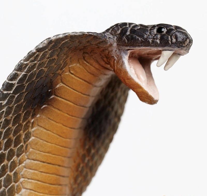Выздоравливайте, смешные картинки очковая змея